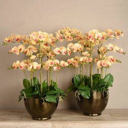 Yellow Orchid Arrangement