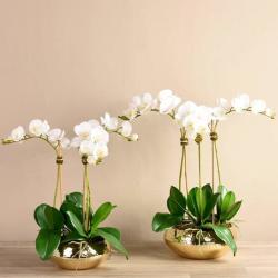 White Chic Orchid Arrangement