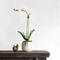 White Pearl Orchid Arrangement