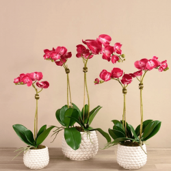 Pink Pearl Orchid Arrangement