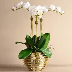 Majestic Orchid Arrangement
