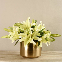 Lily In Gold Vase