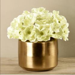 Green Anemone In Gold Vase