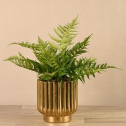 Fern in Gold Vase