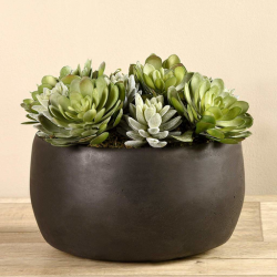 Succulent Arrangement in Bowl