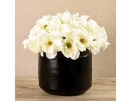 White Anemone In Black Vase