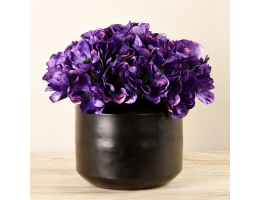 Purple Anemone In Black Vase