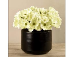 Green Anemone In Black Vase