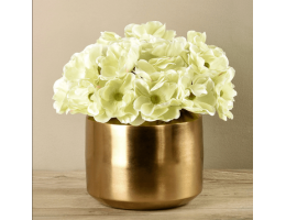 Green Anemone In Gold Vase