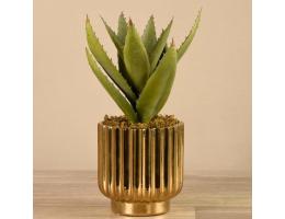 Aloe in Gold Pot