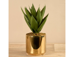 Agave in Gold Pot